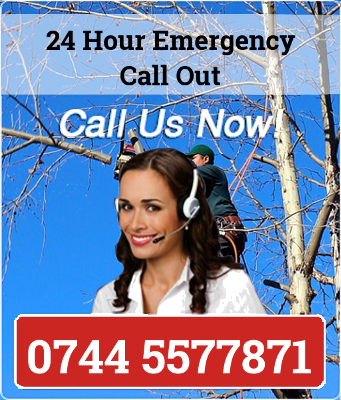 Tree Surgeon Northampton