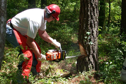 tree surgeon cutting down tree Dent