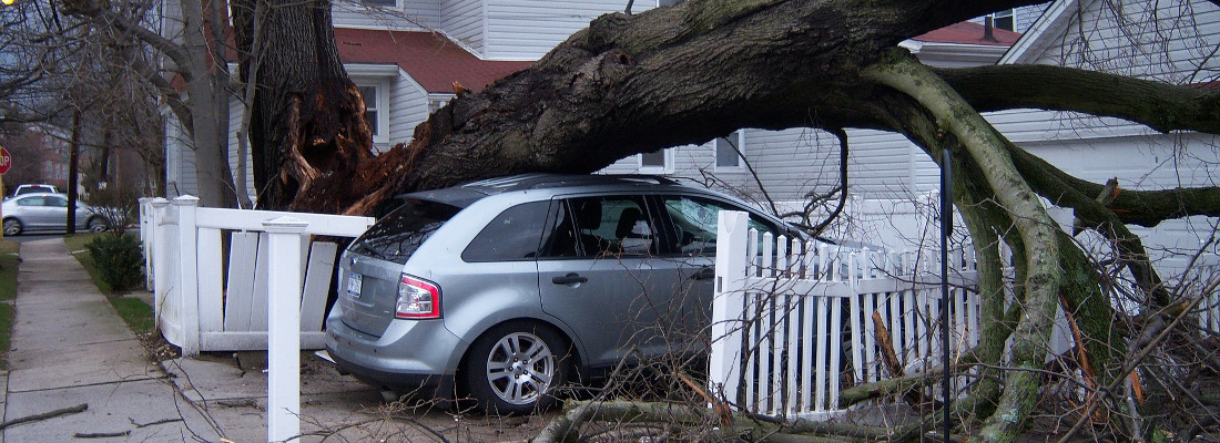 Tree Contractors Kirkby Stephen