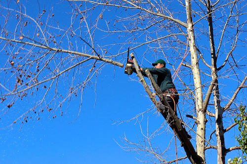 Tree Trimming Shap